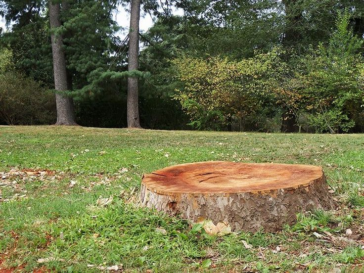 How to Remove a Tree Stump using Epsom Salt Stump
