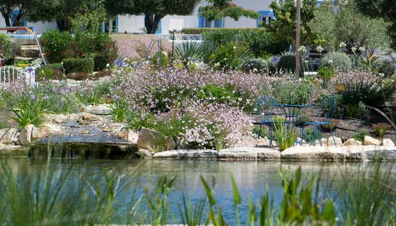 The natural swimming pool after one year. Casa Flor de Sal, Moncarapacho, East Algarve, Portugal