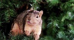 christmas squirrel national lampoons christmas vacation countdown to christmas christmas hunt