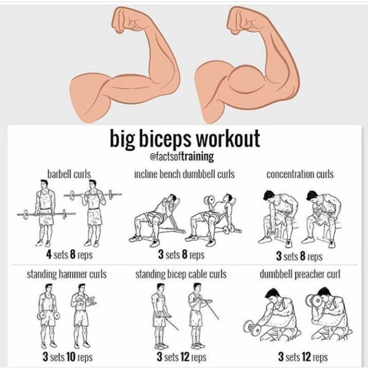 Barbell Curls: 40, 50, and 60  Incline Bench Curls: 30  Concentration Curls: 30  Standing Hammer Curls: 35  Standing Cable Curls: 30, 45, 50  Dumbell Preacher Curls: 30  Go up by 5 pounds each workout.