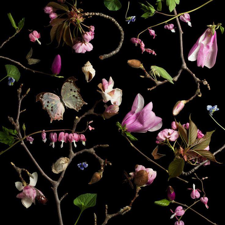 Paulette - Botanicals III (Bleeding Hearts and Magnolias) ... (2017/06/10)