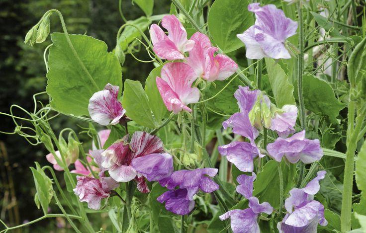 Plantera gott och vackert i en pallkrage - Växter & blommor