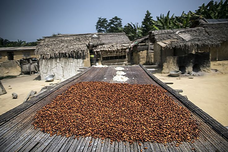 Finally, the seeds are placed on drying racks. When dry, they're ready to be…