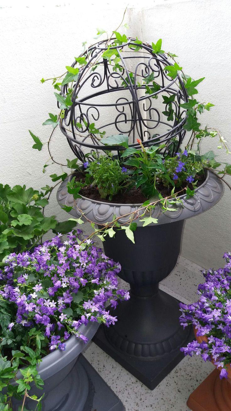 My summer flowers