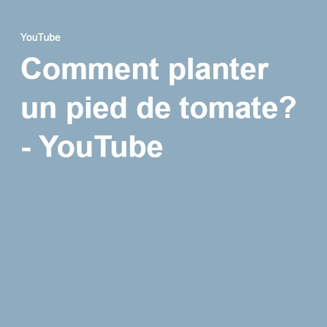 1000 Ideas About Pied De Tomate On Pinterest Le Potager Fraisier Plante And Semis De Tomates