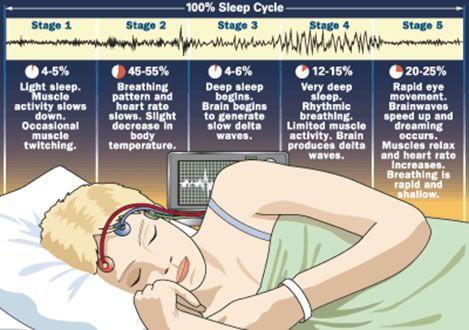 sleep cycle infographic