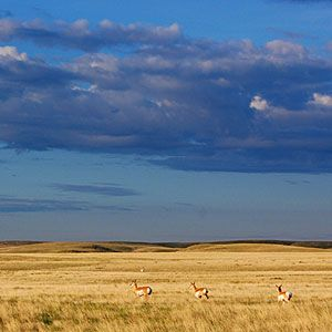 14 national treaures in the West | Northern Montana Prairies | Sunset.com
