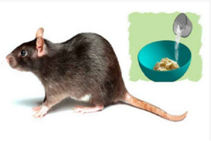 3 Effective Home-Made Methods To Get Rid Of Rats Once And For Allhttps://www.dailyusefulinfo.com/wp-content/uploads/2018/01/safeimage-90-696x464.jpg