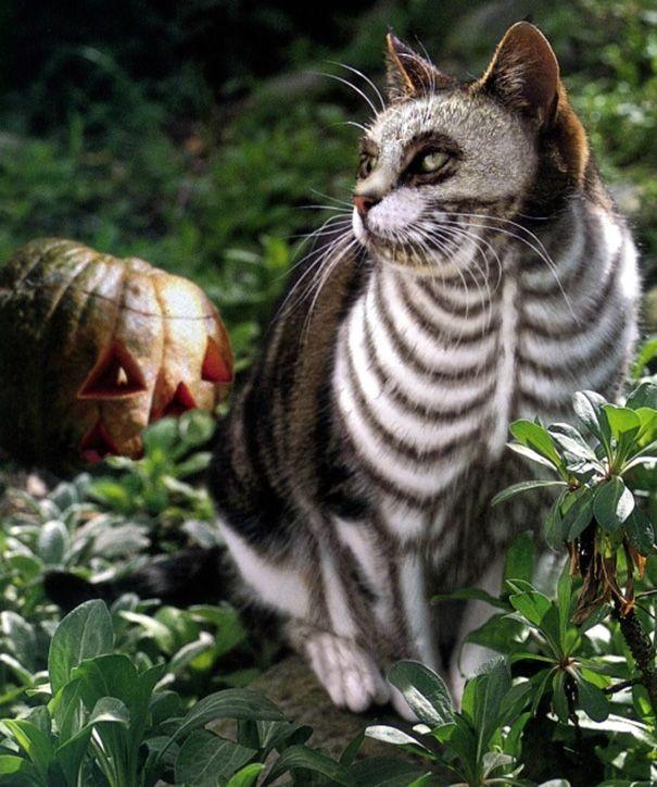 Cat Skeleton #halloween #cat