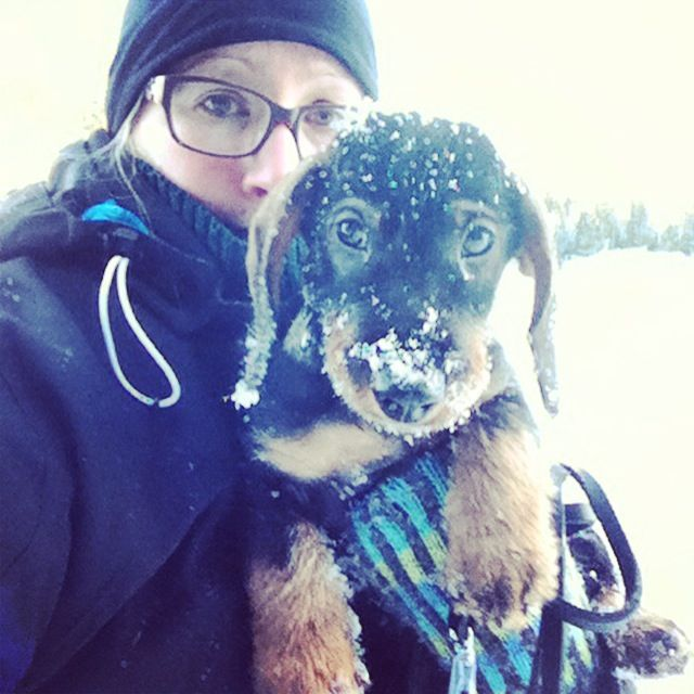 Wirehaired dachshund puppy Urho only knows the Finnish winter so far.