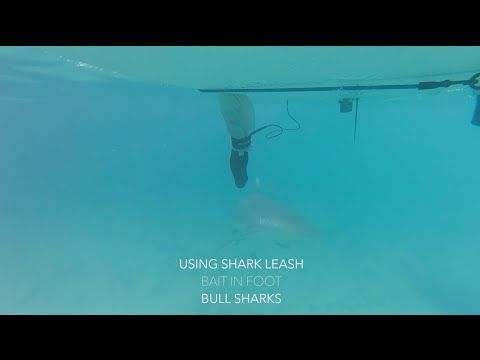 Leash Anti-Shark | God Save the Wind | Windsurfing in Love