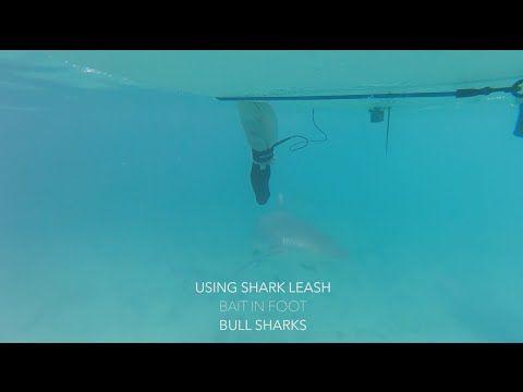 Leash Anti-Shark | God Save the Wind | Windsurfing in Love