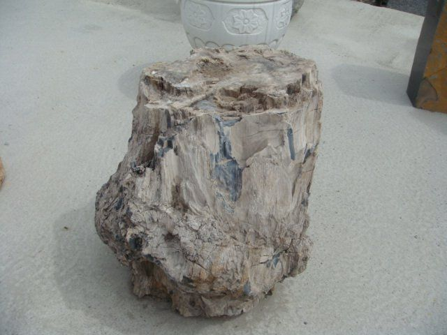 Madera petrificada ( fósiles del árbol ) - spanish.alibaba.com