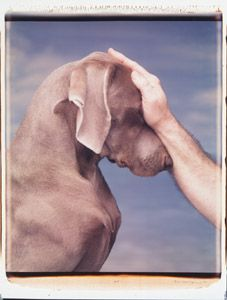 William Wegman..A Family That Goes On 8 Feet and 8 Paws