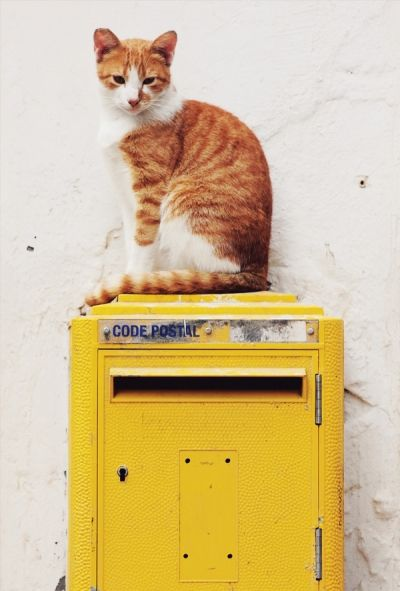 Kot & skrzynka pocztowa