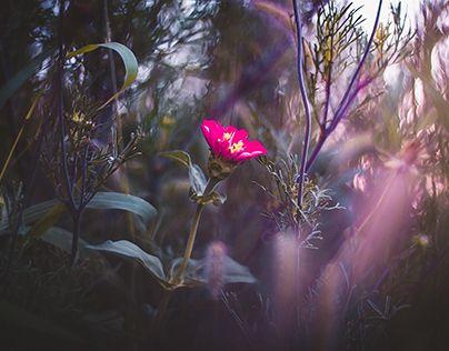 noi flori