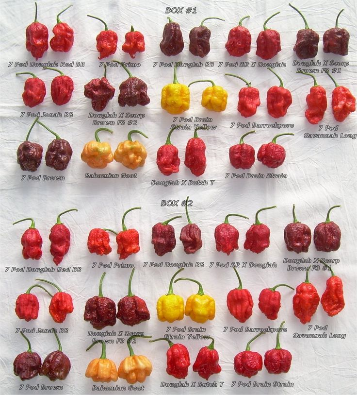 Types of chillies in the world google search chillies - Best romanian pepper cultivars ...