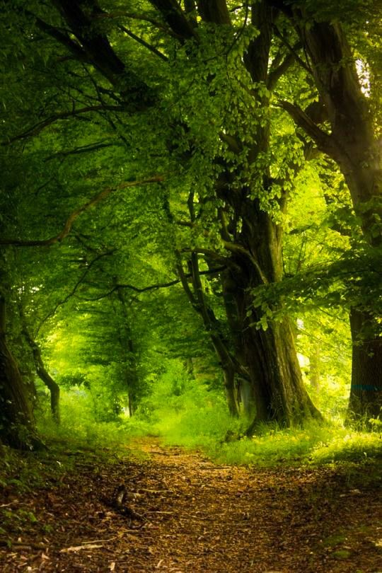 Forest path (no location given) by Stephi
