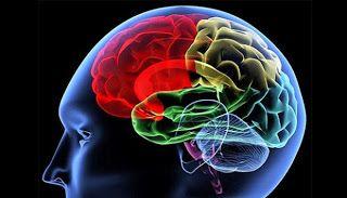 Makanan Yang Berfungsi Mencerdaskan Otak Manusia | daftarinfo : banyak tau banyak ilmu