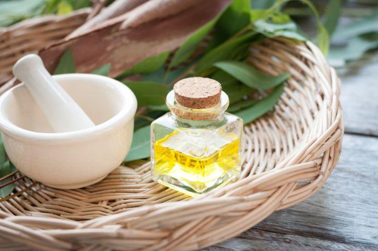 Phytotthérapie : voici quelques recettes naturelles à base d'huile essentielle d'eucalyptus pour dégager les bronches encombrées, pour la...