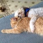 A month ago we adopted a sick kitten. Our dog helped nurse him back to health.