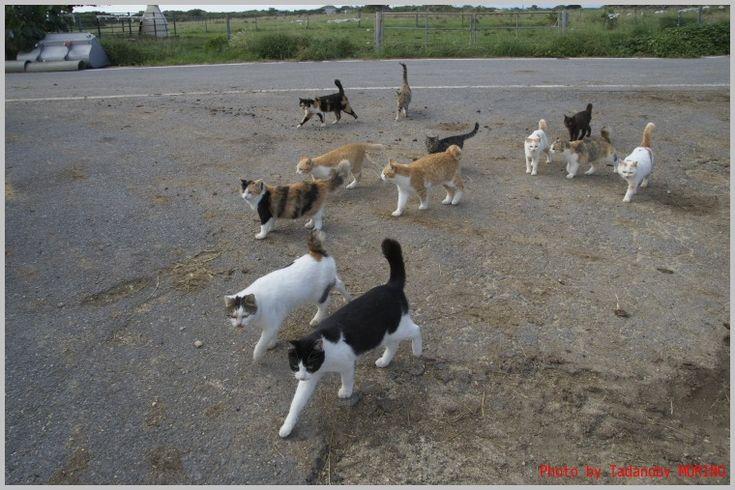 牧場の猫たち : CAFE IL MORINO by Tadanobv MORINO