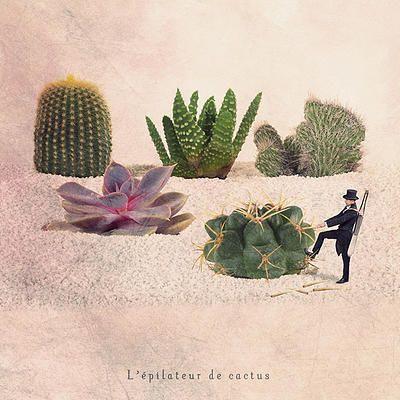 photographe art | EPILATEUR DE CACTUS