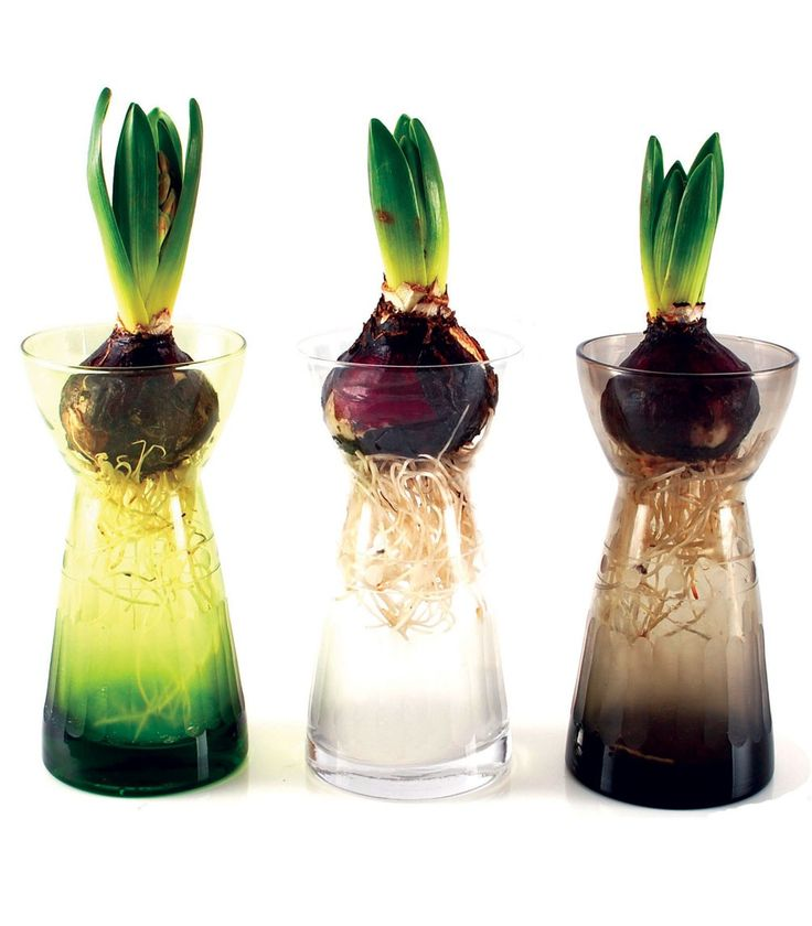 17 Best Images About Bulbs On Pinterest Spring Flower
