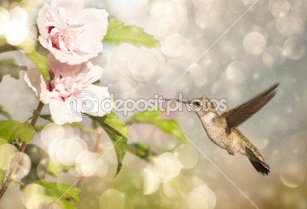 snový obraz kolibřík rubínohrdlý — Stock obrázek #5565733