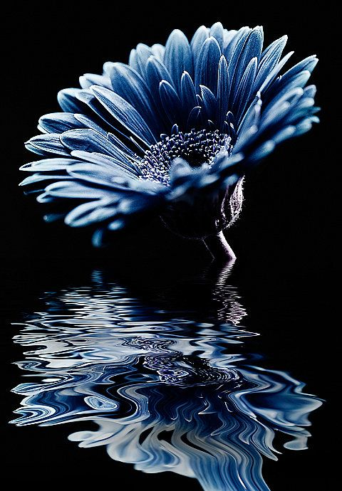 River of Tears  Amy Hopp: Reflection, Blue Flowers, Color Blue, Beautiful Flowers, Amy Hopp, Rivers, Photography, Beautiful Things