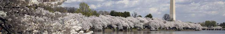 Bloom Schedule. National Park Service, Cherry Blossom Festival