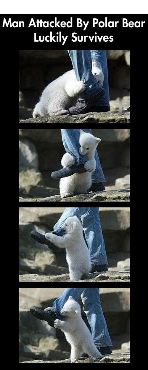 Man survives polar bear attack.