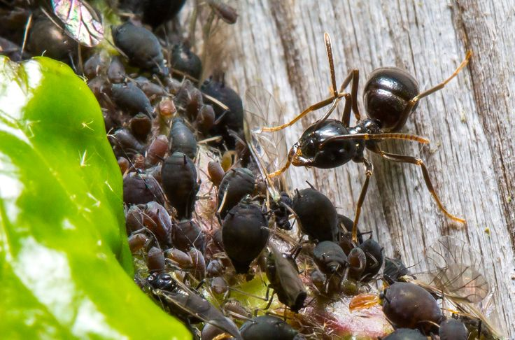 A blog for those interested in ants, keeping ants, observing ants, photographing…                                                                                                                                                                                 More