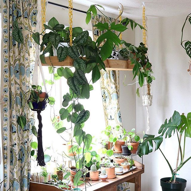 Anyone else crazy for @cleverbloom's hanging plant shelf? Thanks for sharing with us in #InteriorRewilding! We post a new photo from #InteriorRewilding each week. Tag your indoor green oasis for a chance to be featured.