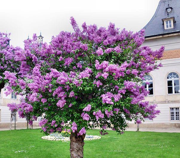 Быстрорастущие деревья или как вырастить сад за пару сезонов