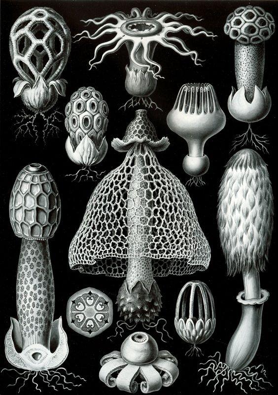 Ernst Haeckl