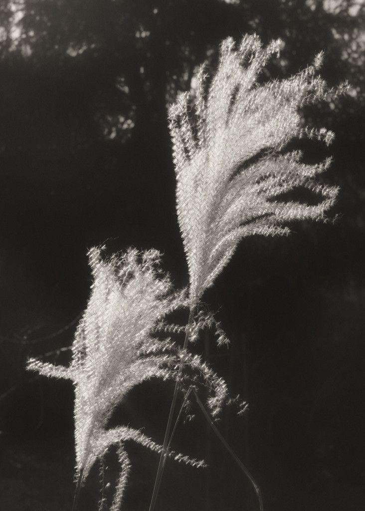 Photography - Francesco Martines - Emotional Herbaria - The Garden www.francescomartines.com/