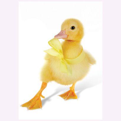 Duck #postcards