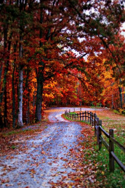Colorful driveway in autumn, dreamy!!!