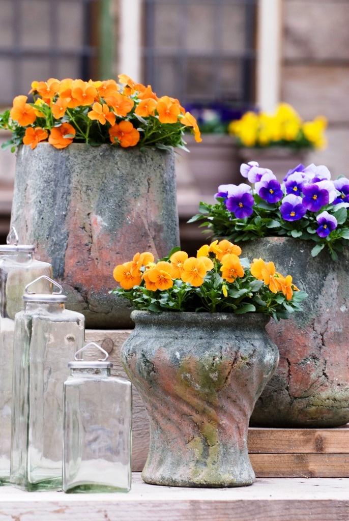 25 Best Images About Lentekriebels On Pinterest Spring