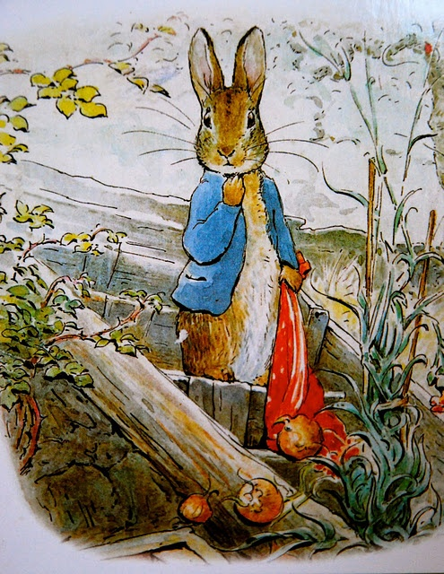Peter Rabbit./****I've always had a thing about rabbits. This was my favorite nursery story. I had nurseries decorated for 3 different little girls, but those rooms made me feel good too. As if Peter were watching from the end of the carrot row.