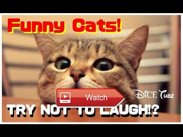 😸 Funny Cats videos Best Cat Videos Ever 😼 Cats are so funny you will die laughing Funny cat compilation Funny Cats Compilation Most See 😽…