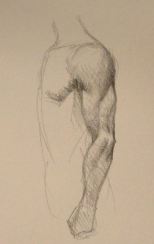 http://idrawgirls.com/images/2010Q4/arm-muscle-side-view.jpg
