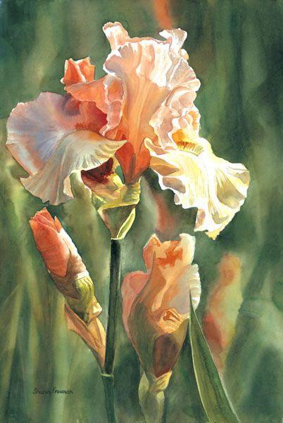 Iris…My Favorite flower!:)