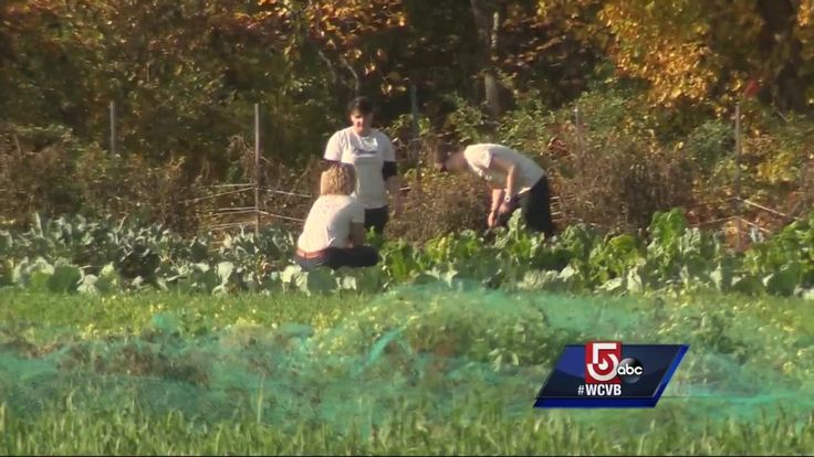 Food For Free and Pine Street Inn's collaboration helps serve healthy, fresh meals to homeless residents at the shelter. Check out this incredible partnership on WCVB Channel 5 Boston's 5 For Good: http://bit.ly/2dTKNLG