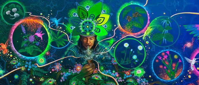 Legal Psychedelics Mystical Herbs