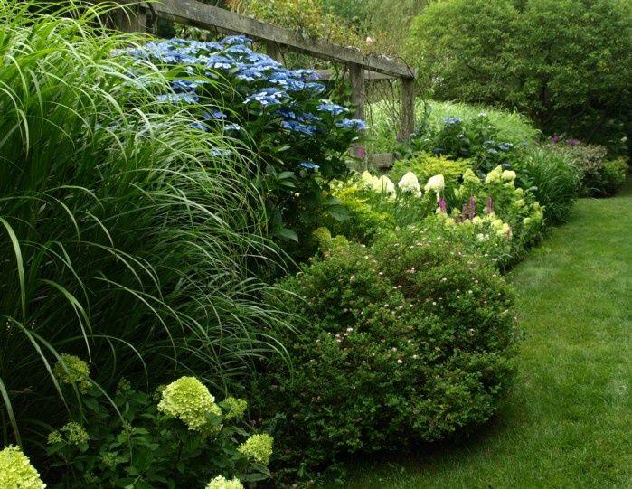 14 best shrub borders images on pinterest landscaping for Shrubs for garden borders