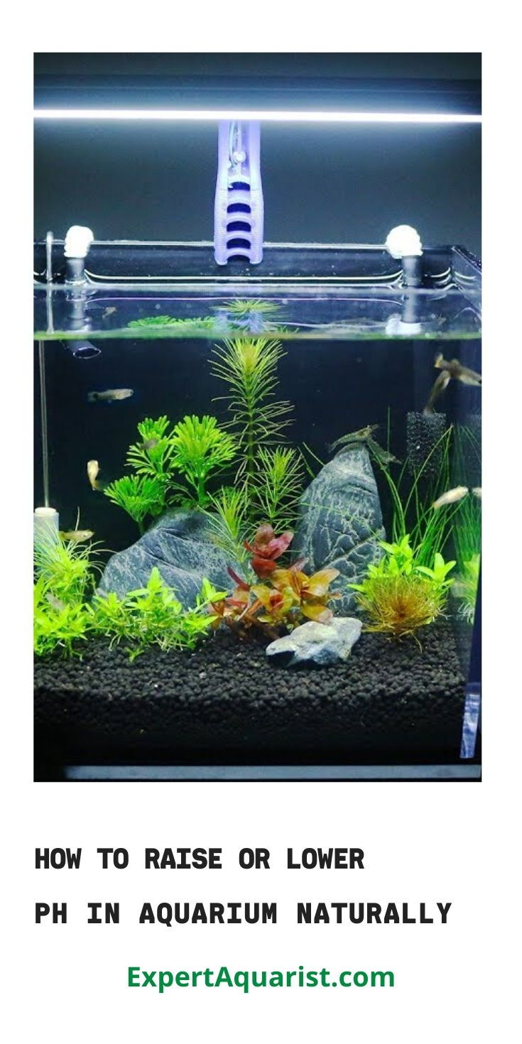 How to Raise or Lower pH in Aquarium (Naturally)   Planted ...