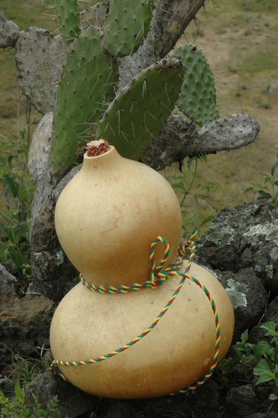 Gourds are a fun plant to grow in your garden. Not only are the vines lovely, but you can you can make crafts with them too  like water canteens. This article will show you how.
