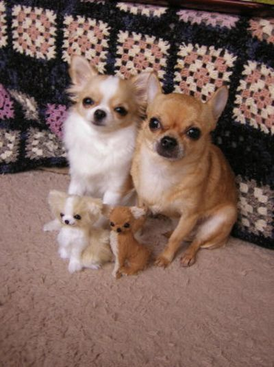 chihuahuas and their dolls.